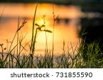 fresh air in the morning at... | Shutterstock . vector #731855590