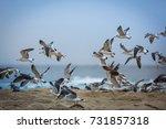 the fall sea gulls | Shutterstock . vector #731857318