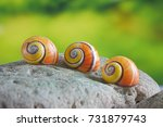 snails   polymita picta or... | Shutterstock . vector #731879743