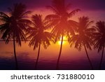 Silhouette Palm Tree And Sea A...