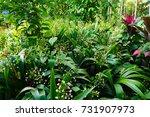 plantation in kalibaru... | Shutterstock . vector #731907973
