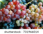 red and white grapes | Shutterstock . vector #731966014