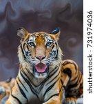 close up tiger. | Shutterstock . vector #731974036