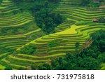 rice terraces   Shutterstock . vector #731975818