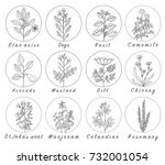 set of spices  herbs and... | Shutterstock . vector #732001054