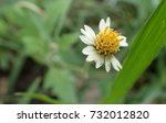 white and yellow flower | Shutterstock . vector #732012820