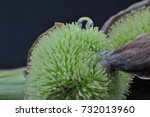 fresh water droplets on green | Shutterstock . vector #732013960