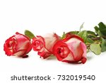Stock photo beautiful red roses on white background 732019540