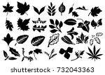 leaf | Shutterstock . vector #732043363