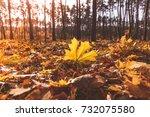 Fall Season In Forest.