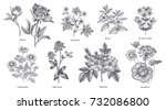 medical herbs and plants big... | Shutterstock .eps vector #732086800