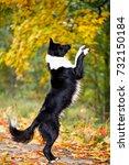 black and white dog | Shutterstock . vector #732150184