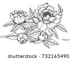 hand drawing and sketch peony... | Shutterstock .eps vector #732165490