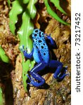 Colorful Blue Frog Sitting In...