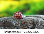 Polymita Picta Or Cuban Snails...