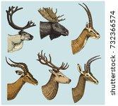 set of horn  antlers animals... | Shutterstock .eps vector #732366574