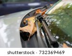 autumn leaf on a car windshield | Shutterstock . vector #732369469
