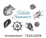 summer concept with shells.... | Shutterstock . vector #732412858