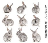 Stock photo set of adorable cute rabbits sit on white background 73243729