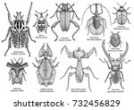 group of exotic insect... | Shutterstock .eps vector #732456829