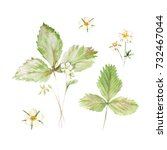 botanical watercolor... | Shutterstock . vector #732467044