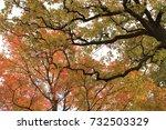 fall | Shutterstock . vector #732503329
