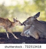 white tailed female deer with ...   Shutterstock . vector #732513418