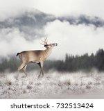 white tailed deer in winter   Shutterstock . vector #732513424