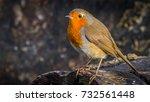 the european robin  erithacus... | Shutterstock . vector #732561448
