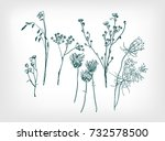 herbal drawn design elements...
