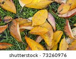 Golden autumn leaves laying on the ground - stock photo