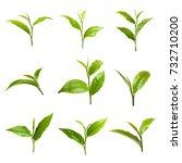 fresh tea leaves isolated on... | Shutterstock . vector #732710200