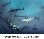 common dolphins working... | Shutterstock . vector #732752284