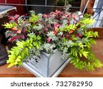 Colorful Plants In A Planter...
