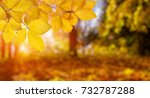 autumn leaves on the sun and... | Shutterstock . vector #732787288