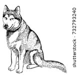 husky dog isolated on white... | Shutterstock .eps vector #732793240