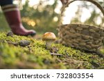 An Edible Mushroom Covered Wit...