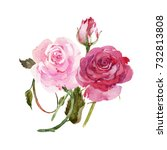 isolated watercolor pink roses. | Shutterstock . vector #732813808