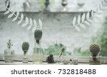 plant in glass bottle  cactus... | Shutterstock . vector #732818488