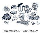 mushroom hand drawn set.... | Shutterstock .eps vector #732825169