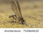 macro closeup on died and dry... | Shutterstock . vector #732864610