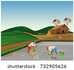 farmer transplant rice in paddy ... | Shutterstock .eps vector #732905626