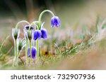 picture of european...   Shutterstock . vector #732907936