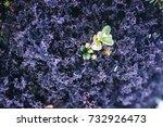 nature backgrounds. natural...   Shutterstock . vector #732926473