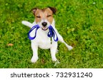 Stock photo dog holding leash in mouth waiting for walk 732931240