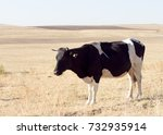 lonely cattle farming on sunny...   Shutterstock . vector #732935914