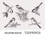 Stock vector set of birds chickadee on coniferous branches vector illustration black and white 732950923