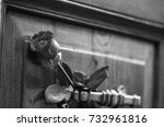 old door close up rose   black  ... | Shutterstock . vector #732961816