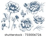 Stock vector  vector floral set with peonies and leaves flower buds linear vintage graphics sketch ink 733006726
