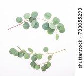 green eucalyptus branches...   Shutterstock . vector #733055293